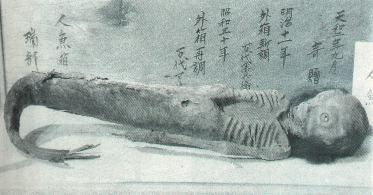 海底人鱼――真实的存在