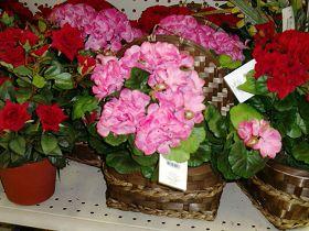 """照片为美国超市里""""中国制造""""的胶花"""