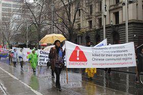 图1-5:法轮功学员冒雨在墨尔本市中心举行反迫害十四周年游行