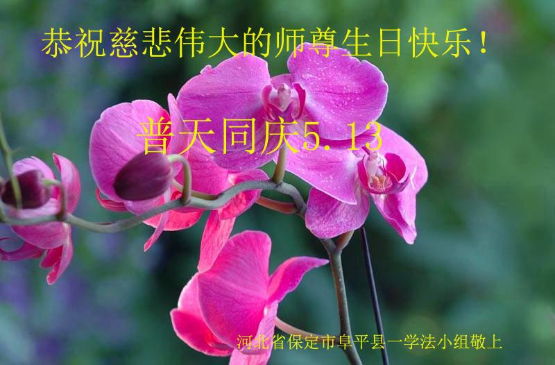 大陸法輪功學員恭賀世界法輪大法日暨李洪志大師華誕(26條)