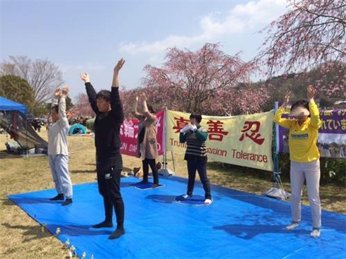 '图1~4:法轮功学员在丰田市水源公园樱花节的草坪上炼功'