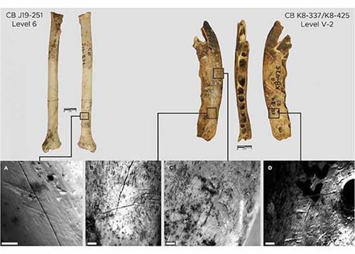 十二万年前用动物骨骼制造的制衣工具