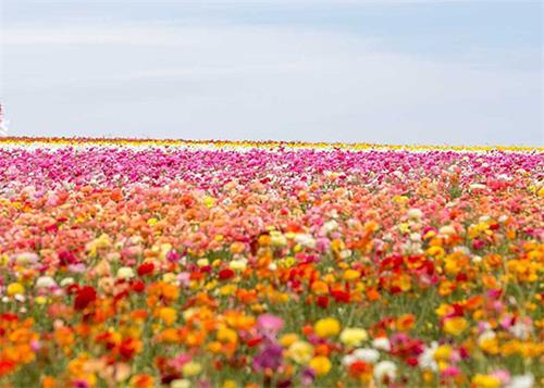 2021-10-13-flowerfield--ss.jpg
