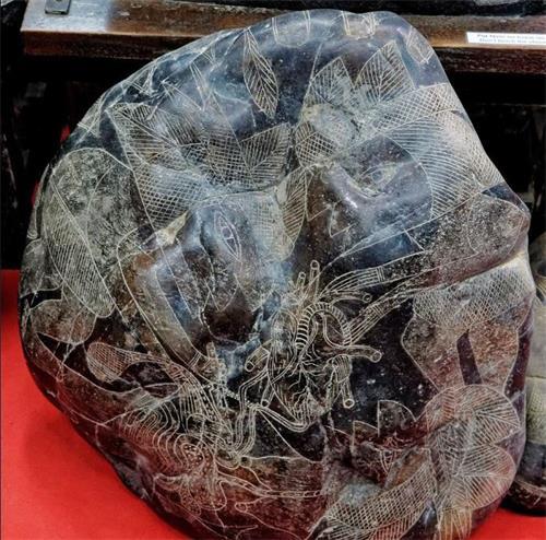 '图11:心脏移植的刻石'